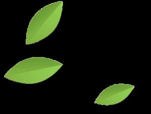 hojas dibujo